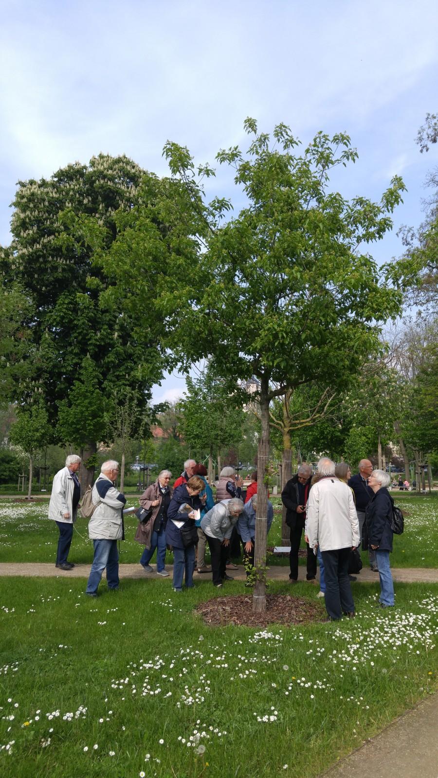Die Reisegruppe rund um den 2010 gepflanzten Feuerahorn.