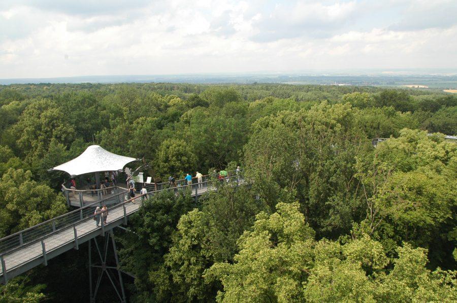 Der Blick vom Aussichtsturm des Baumkronenlehrpfades im Hainisch